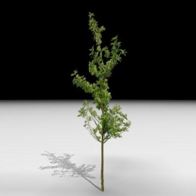 tree j3d 3d model