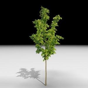 3d tree j3d model