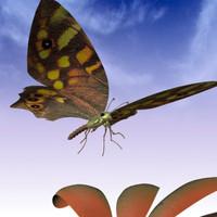 butterfly one-ya.zip