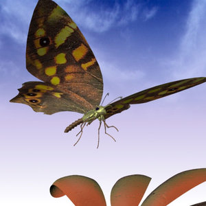 3ds max butterfly moth