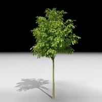tree j3d max