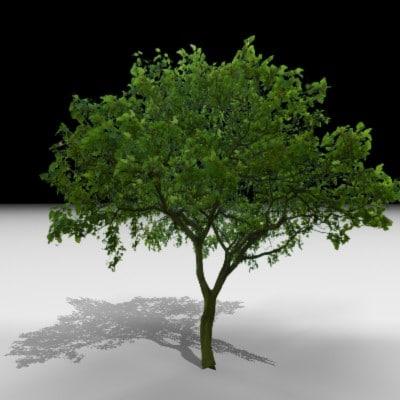 tree j3d 3d max