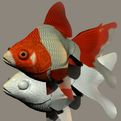 3d ryukin goldfish model