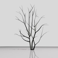 Bk003 Tree