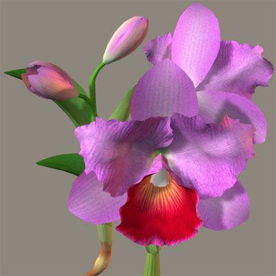 3ds flower cattleya