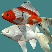 3d shubunkin goldfish