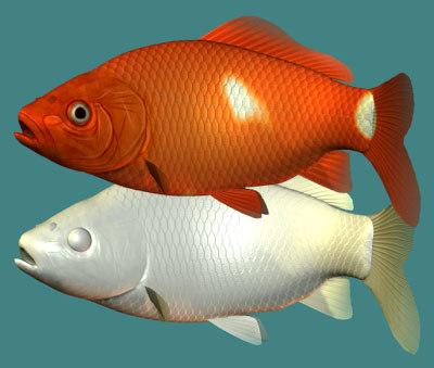 fish goldfish wakin 3d model