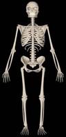 3ds max human skeleton scn