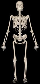 3ds max human skeleton scn