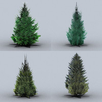 trees norway spruce