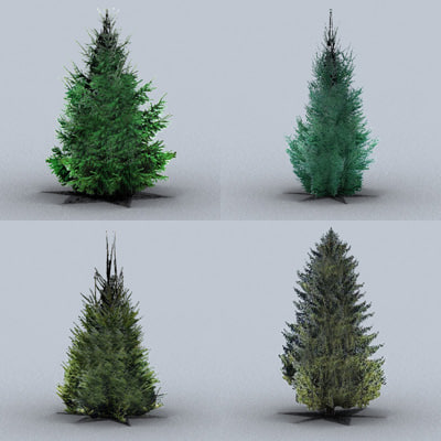 norway spruce trees 3ds