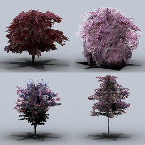 japanese maple trees max
