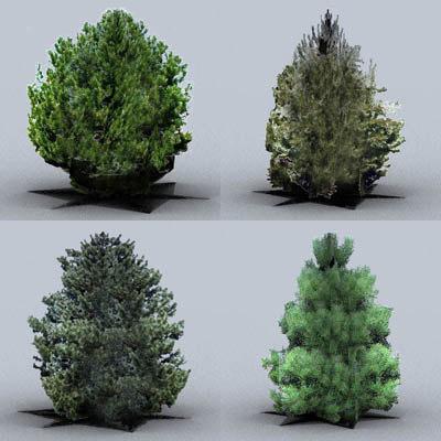 3d model austrian pine trees