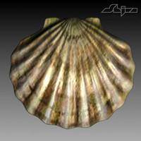 sea shell 3d model
