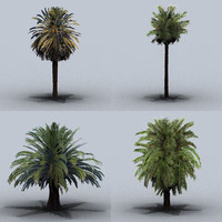 trees date palm