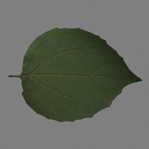 jasmine leaf 3d model