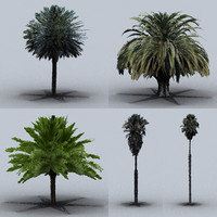 trees palm