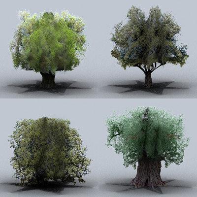 trees olive