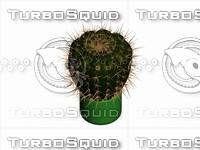 Cactus.rar