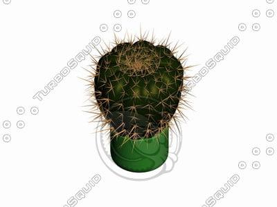 plant cactucs 3d model