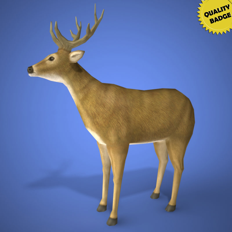 real time deer 3d model