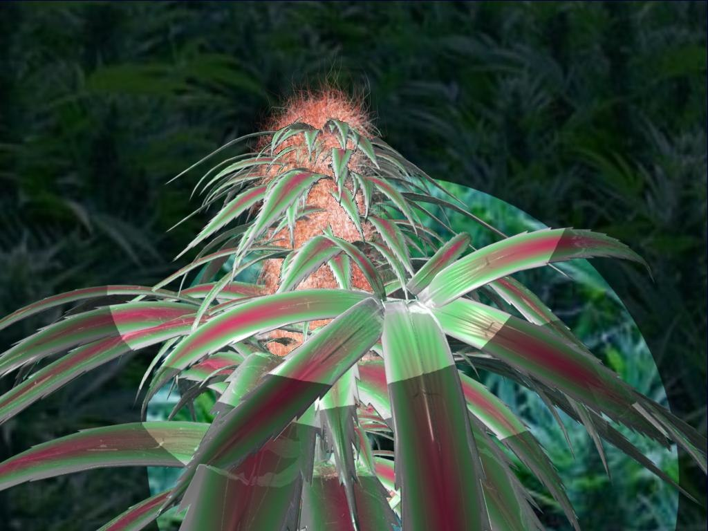 3d model kindbud marijuana plant