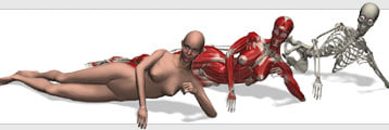 cghuman: eve muscles skeleton 3d model