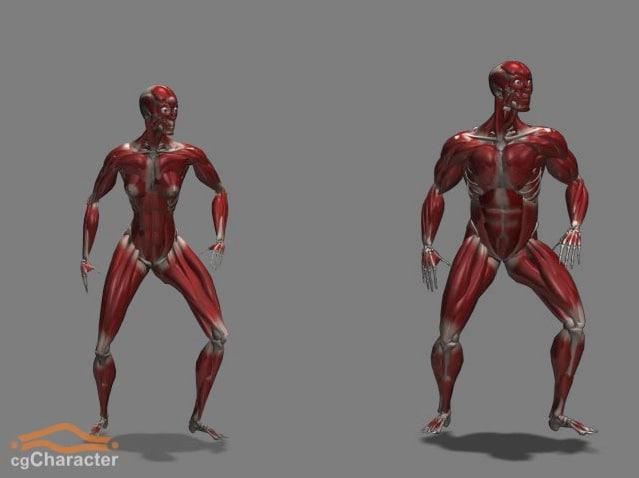 cghumans: eve muscles skeleton 3d model