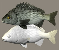 3d 3ds black porgy