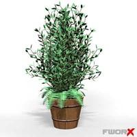 House plant008_max.ZIP