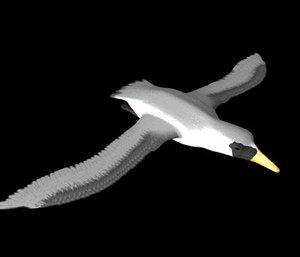 lwo gull bird