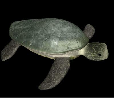 turtle lwo