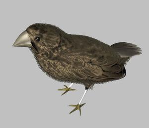 lightwave finch bird