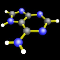amino acid adenine molecular structure