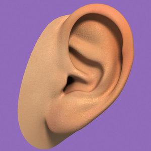 realistic ear 3d model