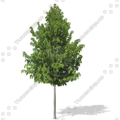 tree architectural renderings 3d model