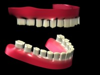 free gum teeth 3d model