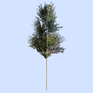 photoshop bitmap tree 3d model