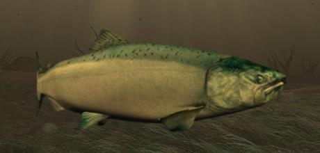 salmon fish 3d model