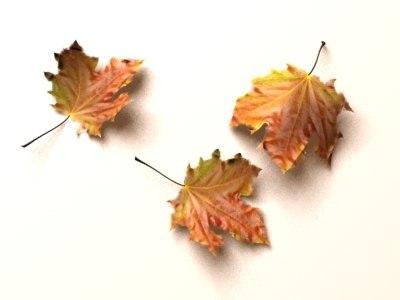 max leaves dry