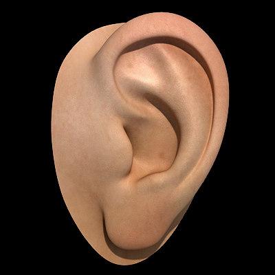 ear hires subdivision 3d model