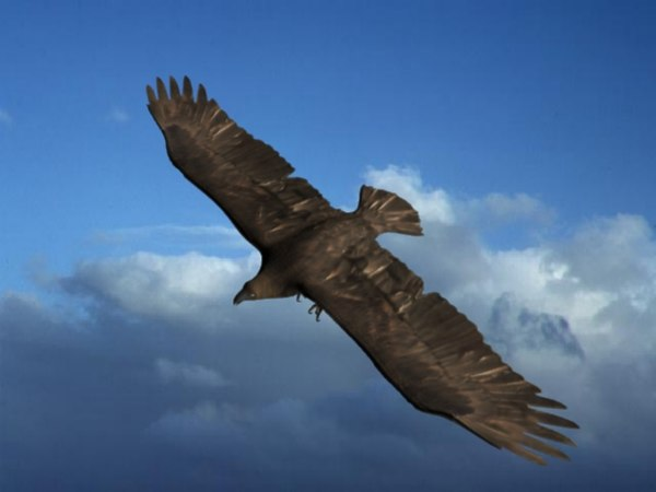eagle large 3d model