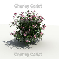 3d plant oleander