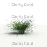 Plant_Deer Grass