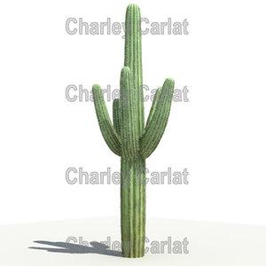 saguaro cactus 3d max
