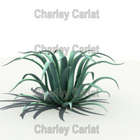 octopus agave 3d model