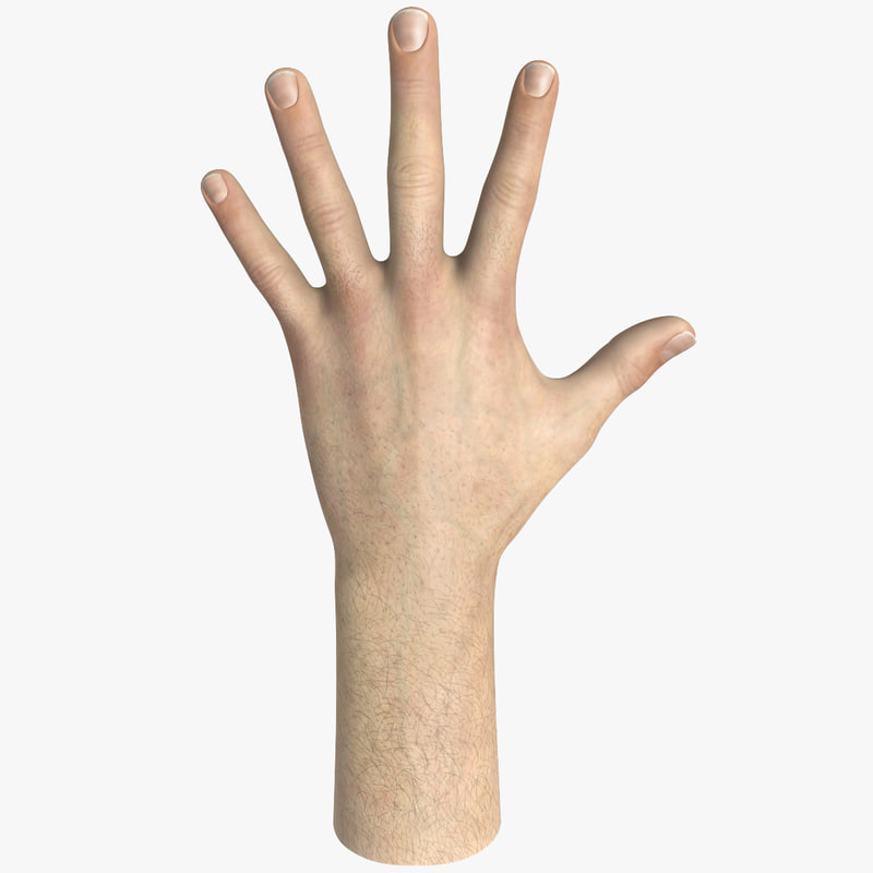 male hand modeled 3d model