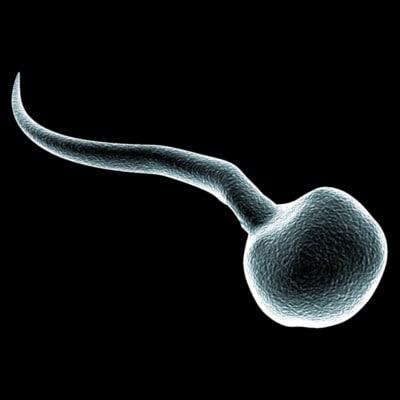 microscopic sperm cell 1 3d model