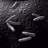 bacteria organism infection 3d model