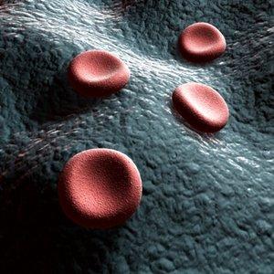 3d model blood cells